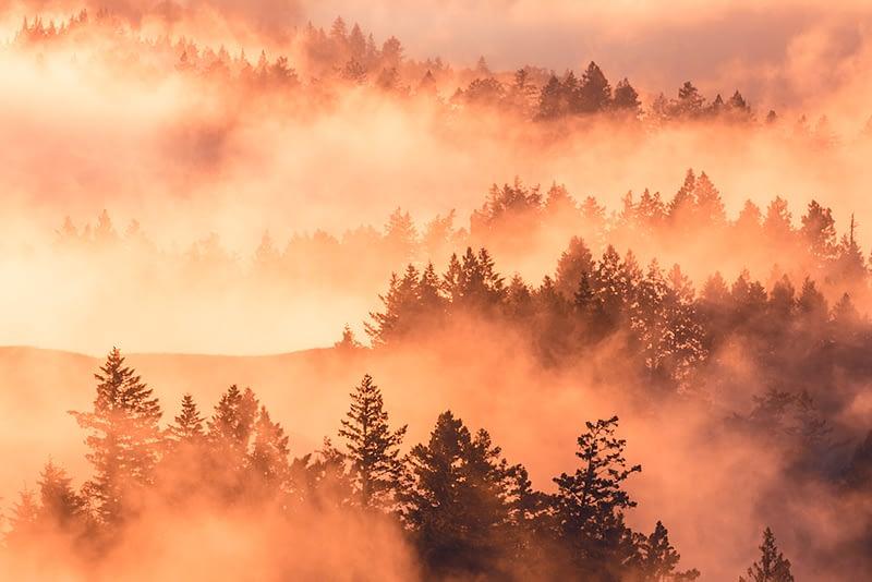Sumuinen metsämaisema auringonlaskussa